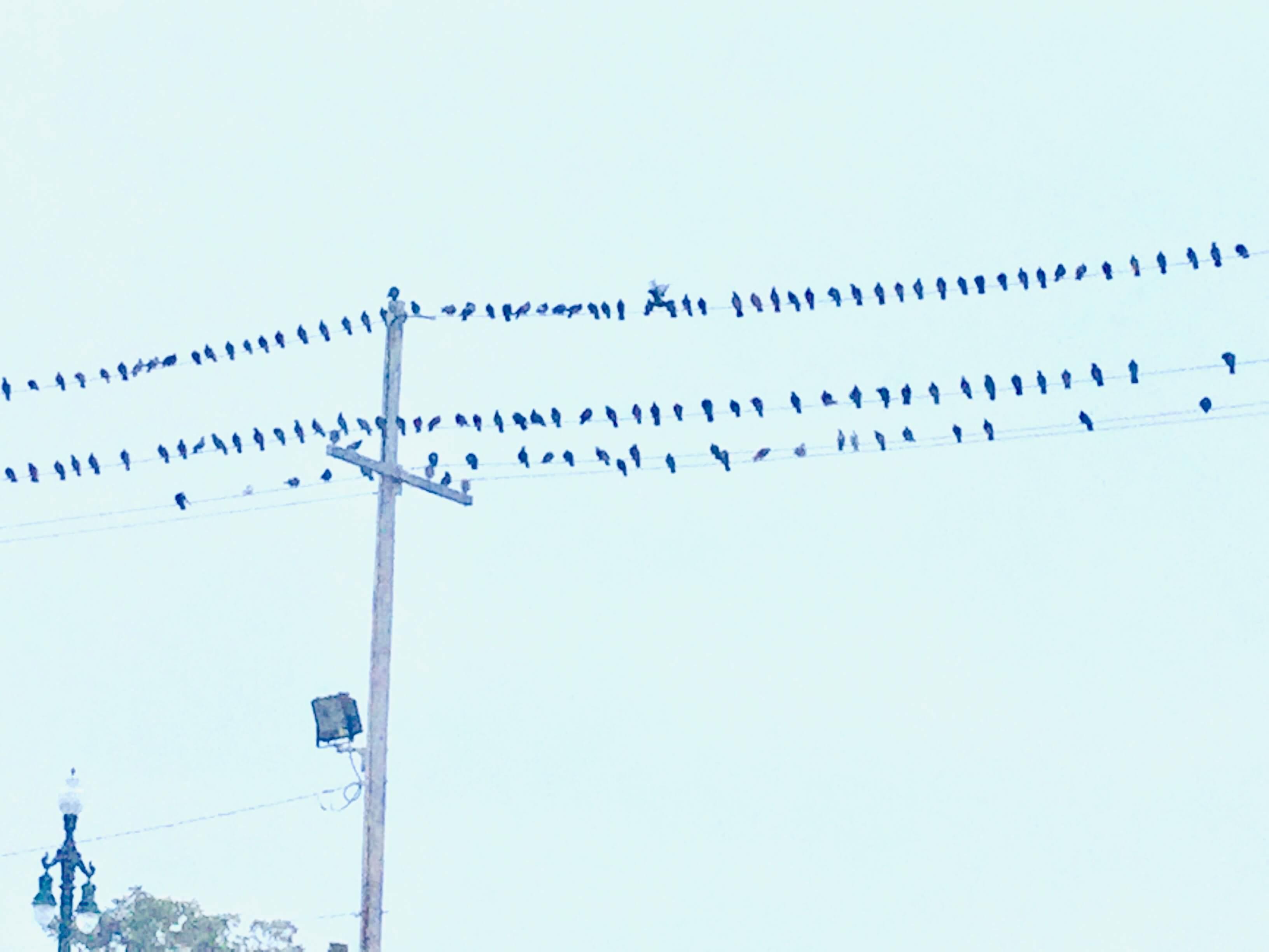 La Belle Esplanade birds on a wire | La Belle Esplanade