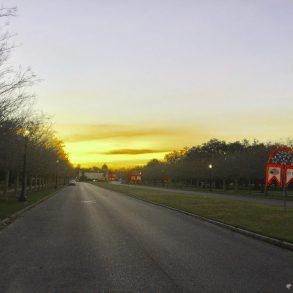 Sunrise in City Park from La Belle Esplanade